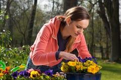 Plantando o potenciômetro das flores Foto de Stock Royalty Free