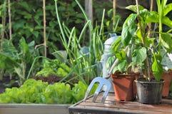 Plantando o vegetal Fotografia de Stock Royalty Free