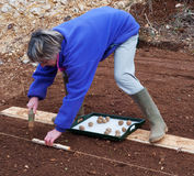 plantando potatos Imagem de Stock