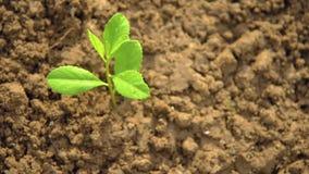 Plantando ?rvores, amando o ambiente e protegendo a natureza que nutre o dia de ambiente de mundo das plantas para ajudar o olhar vídeos de arquivo