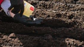 Plantando sementes da cenoura video estoque