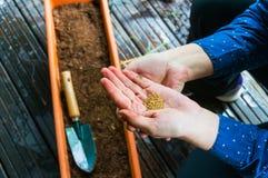 Plantando sementes de flor Imagens de Stock
