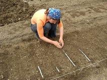 Plantando sementes na fita Fotos de Stock Royalty Free