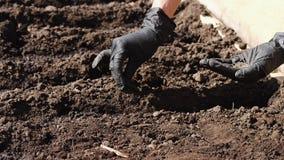 Plantando sementes para sujar vídeos de arquivo
