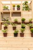 Plantando tomates Fotos de Stock
