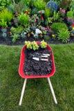 Plantando um jardim amarelo do celosia Imagem de Stock Royalty Free