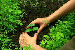 Plantando uma árvore Fotos de Stock