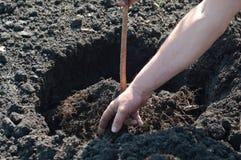 Plantando uma árvore nova Foto de Stock Royalty Free