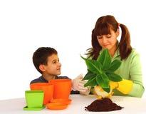 Plantando uma flor Imagens de Stock Royalty Free