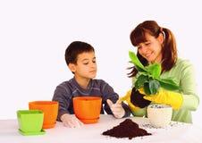 Plantando uma flor Imagem de Stock