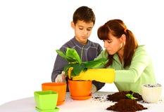 Plantando uma flor verde Fotografia de Stock Royalty Free