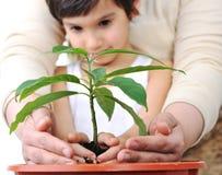 Plantando uma planta fotos de stock