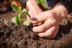 Plantando uma planta nova imagem de stock
