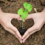 Plantando uma vida nova da árvore Imagens de Stock Royalty Free
