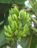 plantani Fotografia Stock Libera da Diritti