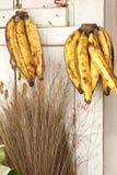 Plantani (Musa) Immagine Stock