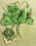 plantano Erbe secche Medicina di erbe, fitoterapia h medicinale Fotografia Stock Libera da Diritti
