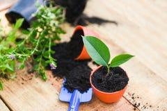 Plantant des fleurs dans le pot avec le sol sur le fond en bois - travaille usine d'outils de jardinage de la petite à l'arrière  image libre de droits