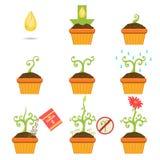 Plantant la graine Istruction étape-par-étape Photographie stock libre de droits