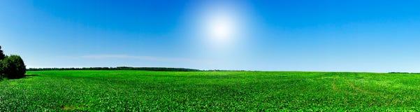 Plantação agradável da soja no início do verão. Imagens de Stock Royalty Free