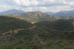 Plantação da palma de óleo Fotografia de Stock Royalty Free