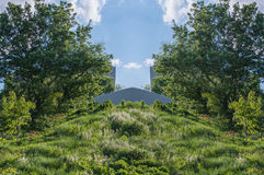 Plantas, árboles y paramera Imagen de archivo libre de regalías