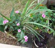 Plantas żadny jardim fotografia stock
