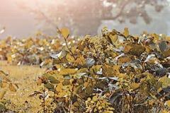 plantas Foto de Stock Royalty Free