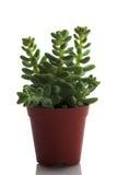 Plantas Fotos de Stock Royalty Free
