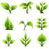 Plantas Imagem de Stock Royalty Free