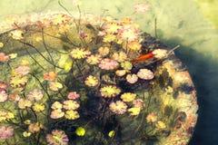 plantas Fotos de archivo