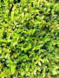 plantas fotografia de stock