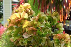 plantas Imagen de archivo libre de regalías