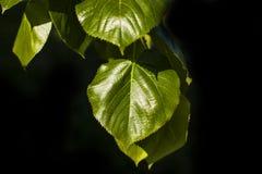 plantas Fotos de Stock