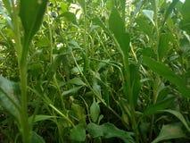 Plantas Obraz Stock