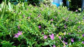 plantas Imagens de Stock