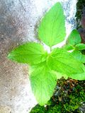 plantas Imagem de Stock