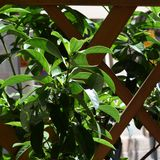 plantas Foto de archivo