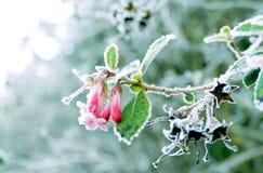 plantas Imagens de Stock Royalty Free