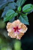 plantas Imagen de archivo