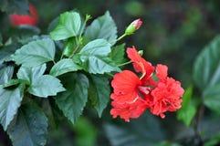 plantas Fotografía de archivo libre de regalías
