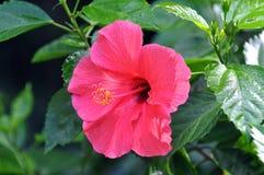 plantas Imagenes de archivo