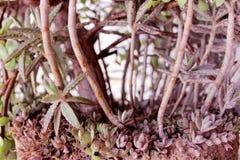 plantas Foto de Stock