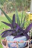 plantas Fotografía de archivo