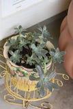 plantas Imágenes de archivo libres de regalías