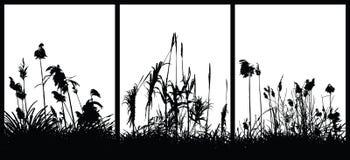Plantas ilustración del vector