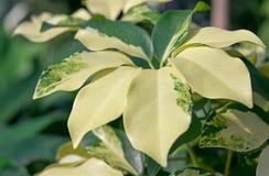 Plantas abigarradas Imagenes de archivo