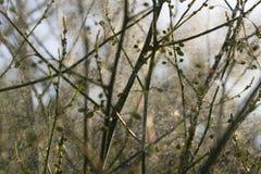 Plantas abstratas Imagens de Stock