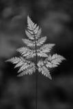 Plantas abstratas Foto de Stock Royalty Free