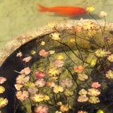 Plantas acuáticas Imágenes de archivo libres de regalías